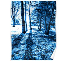 Blue Forest 2 Natural Light and Shadow Poster