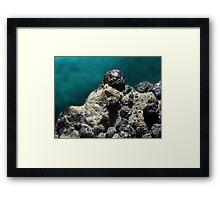 Sphalerite Framed Print