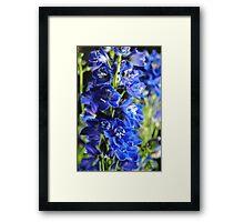 Blue Delphinium Framed Print