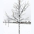 Snow Tree iPhone 4 Case by Warren Paul Harris