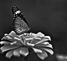 Madam Butterfly...Got Featured Work by Kornrawiee
