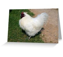 White Chick Greeting Card