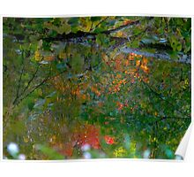 Where brances touch the surface of fall Poster
