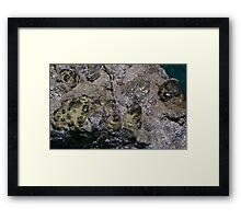 Marcasite Framed Print