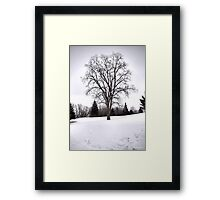 Tree in Landscape, Early Spring with Snow  Framed Print