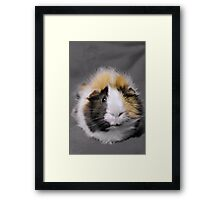 Scruffy Framed Print