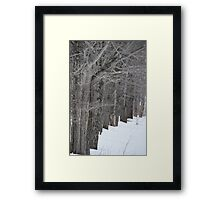 Like Trees in a Row Framed Print