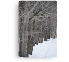 Like Trees in a Row Canvas Print