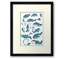whale sharks! Framed Print