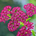 Little Pink Flowers by Rick Louie