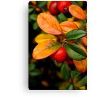 Christmas red, gold and green Canvas Print