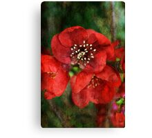 Japonica Blossoms Canvas Print