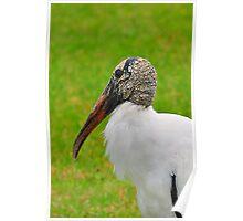 Wood Stork Poster