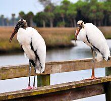 Wood Stork on a Pier by joevoz
