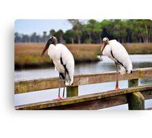 Wood Stork on a Pier Canvas Print