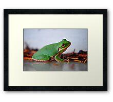 Little Frog Framed Print