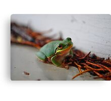 Hanging Out. Canvas Print