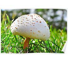 Mushroom Cap Poster