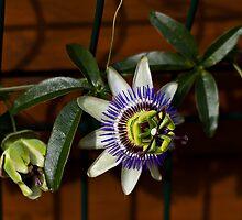 Flower of september! by Marie Moriscot