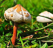 Two Mushrooms by joevoz