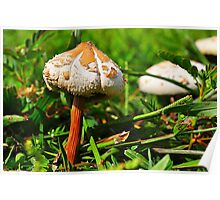 Two Mushrooms Poster