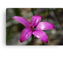 Pink Enamel Orchid Canvas Print