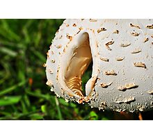 Mushroom Cap with Hole Photographic Print