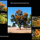 West Australian Christmas Tree.  by Eve Parry
