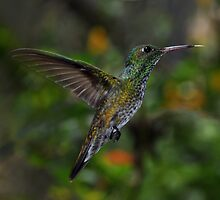 Humming Bird by Peter Hammer