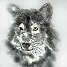 Wolf with Amber eyes by Diane  Kramer