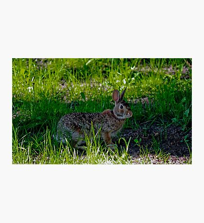 Peter Cottontail Photographic Print