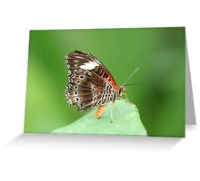 Stunning Butterfly Greeting Card