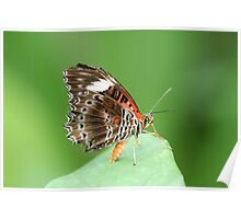 Stunning Butterfly Poster