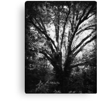 Rooted in Indifference Canvas Print