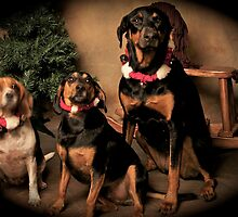Is That Santa Coming.... by Sherry Hallemeier