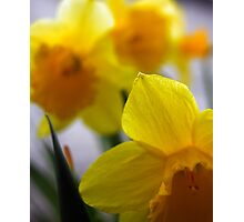 You'd be Daff'd not to get out in the Garden Photographic Print