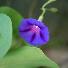 Hanging Flower by Darren Freak