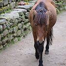 Lone Horse by Darren Freak