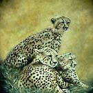 Cheetahs by WienArtist