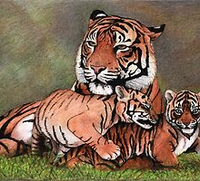 Family of tigers by savousepate