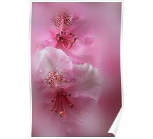 Rhododendron Dreams Poster