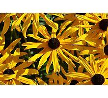 Cone flowers Photographic Print