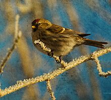Song Bird in Winter Frost by Donna Ridgway by Donna Ridgway