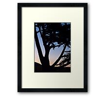cypress tree near the Cambria coast at sunset Framed Print
