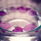 Petals by Kameron Walsh