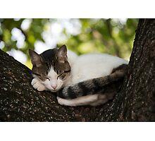 Sleepy Puss  Photographic Print
