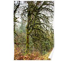 Tangled Maple in a Rain Forest Poster