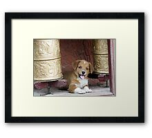 Tikse Puppy Framed Print