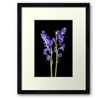 Bluebells, From the very Woods I Created! Framed Print
