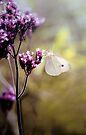 Pretty in Purple by yolanda